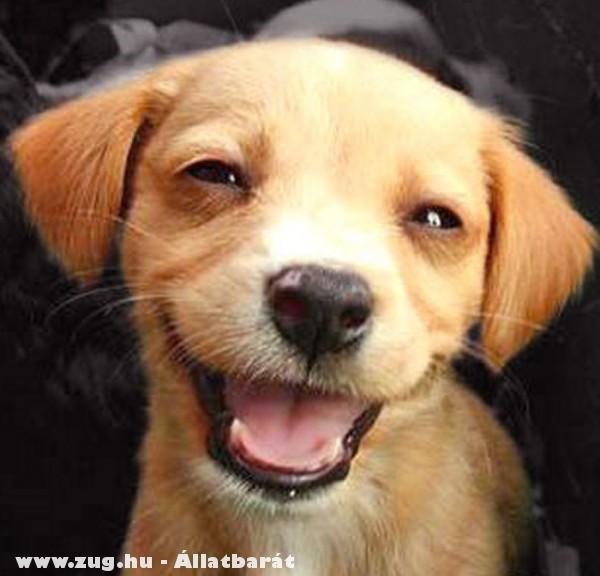 Boldog kutyus vagy csak elbambult?