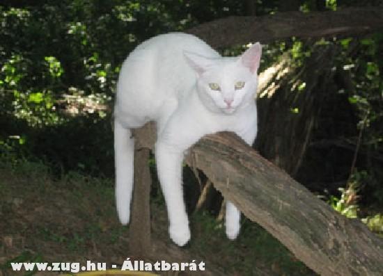 Cica a fán