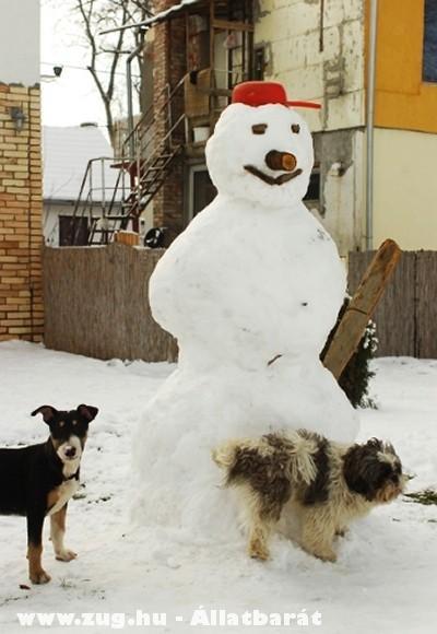 Kutyák és a Hóember!