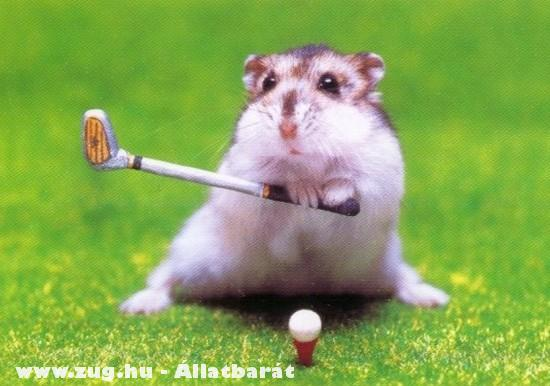 Profi golfjátékos