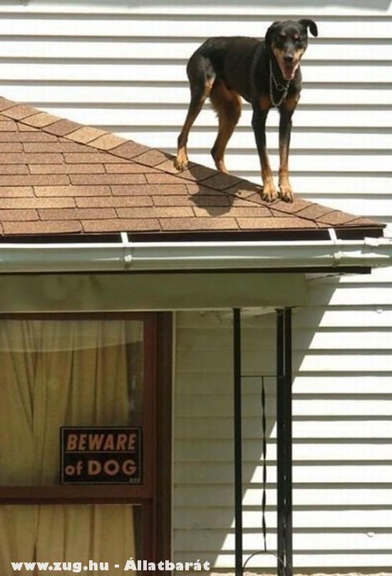 Kutya a tetõn