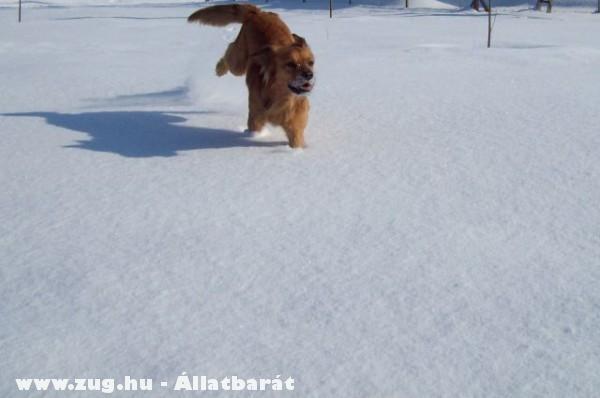 Kicsi a nagy hóban