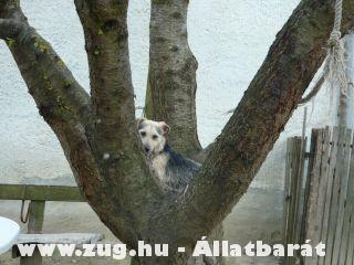 Benji fára mászott