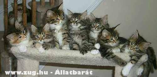 Felsorakoztak a cicák