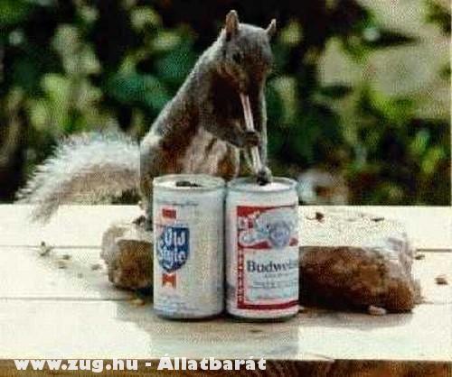 Szomjas mókus