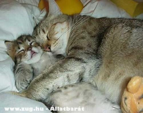 Megfáradt cicusok