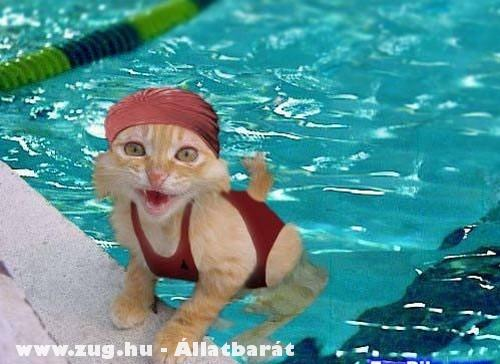 Cica úszósapkában