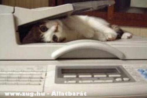 Macskafénymásolat?!