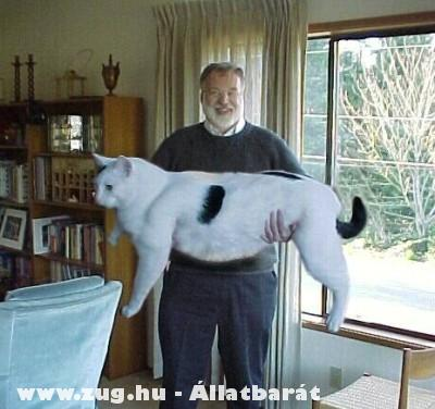 Megnõtt cica