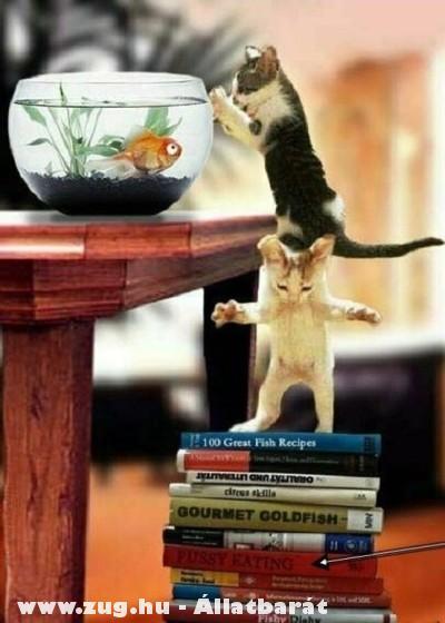 Akcióban a cicák