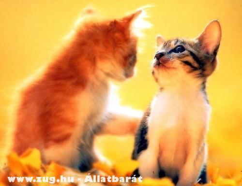 Szerelmes pár
