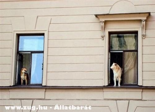 Szomszéd kutyák