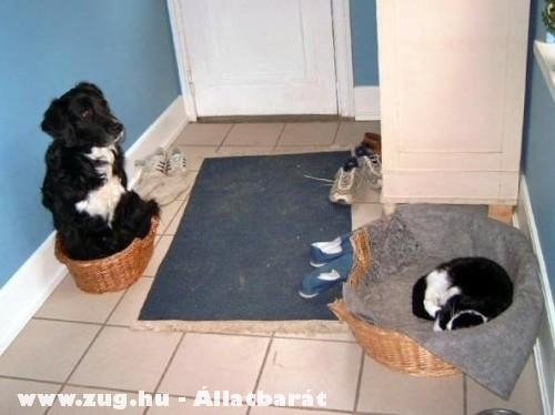 Helyet cseréltek a háziállatok