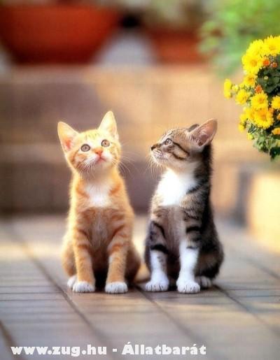 Két cica egy pár