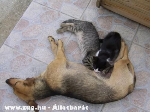 Kutya-macska család