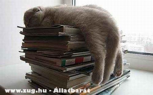 Elfáradt a cica