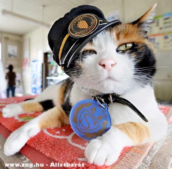Kínai macskaarisztokrata