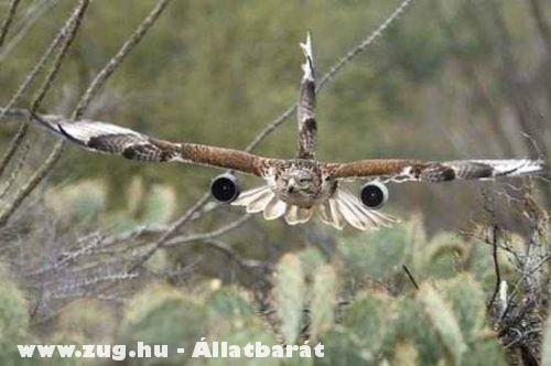 Felturbózott madár