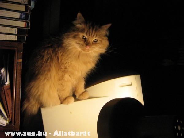 Szonja cicám (ellenõrzi az egeret a PC-n)