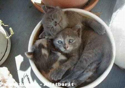 Cserépben a cicák
