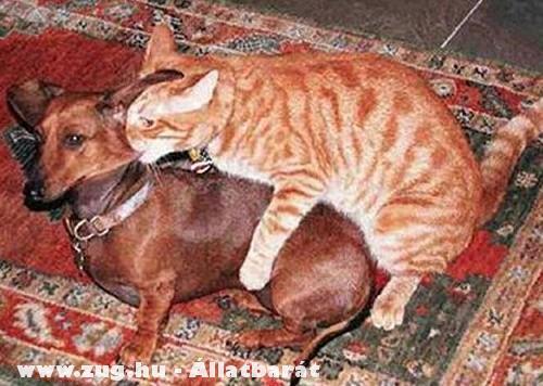 Kutya és Cica huncutkodik!