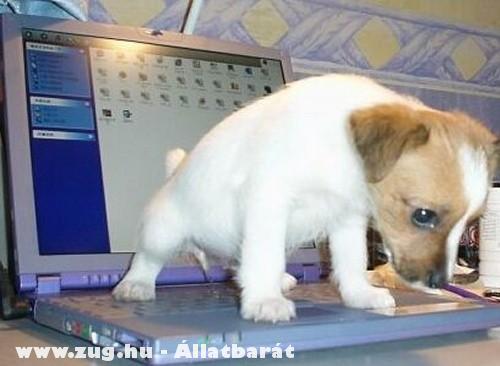 Laptopra pisil a kutya