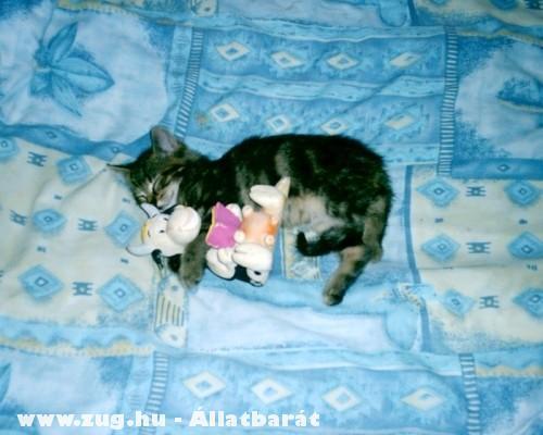 Egy cica és a kisállatai