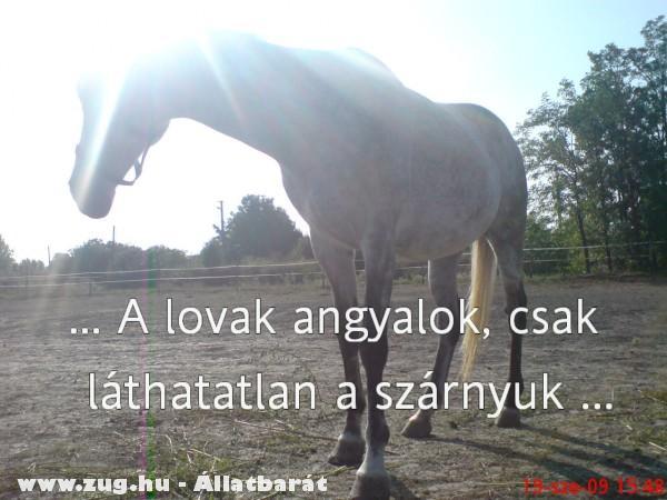 A lovak angyalok csak láthatatlan a szárnyuk. Vénusz<3. Lovi<3