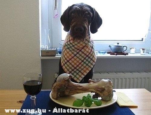 Jó étvágyat mindenkinek!