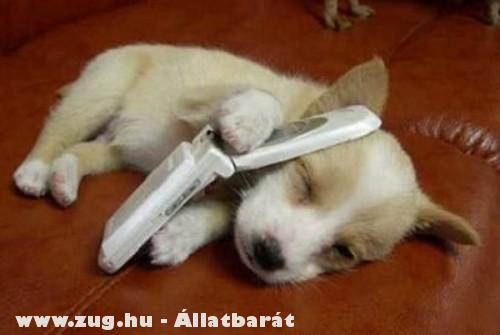 Késõbb visszahívlak