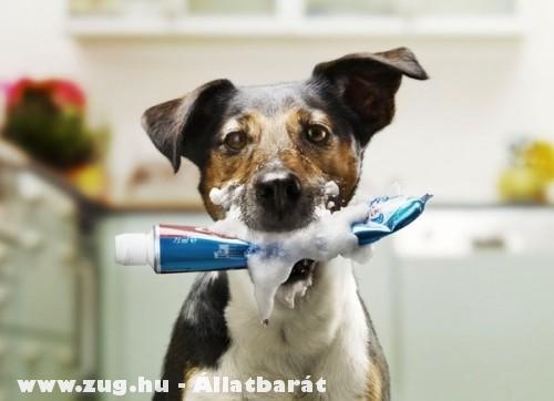 Hoztam a fogkrémed