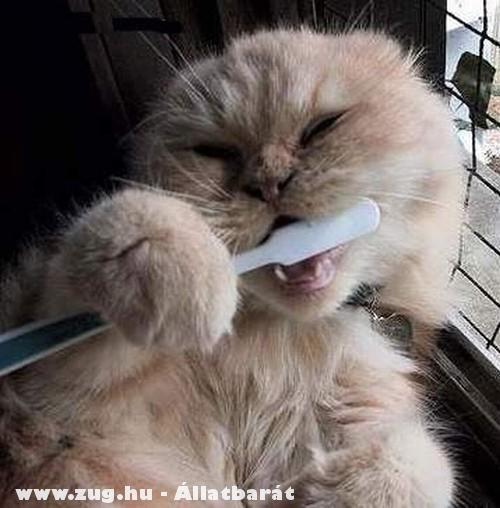 A cica tsizta állat