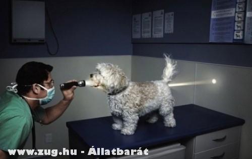 Vizsgálaton a kutyus