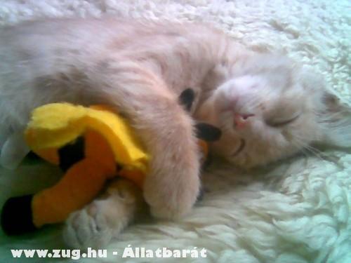 A cica és a kabalája
