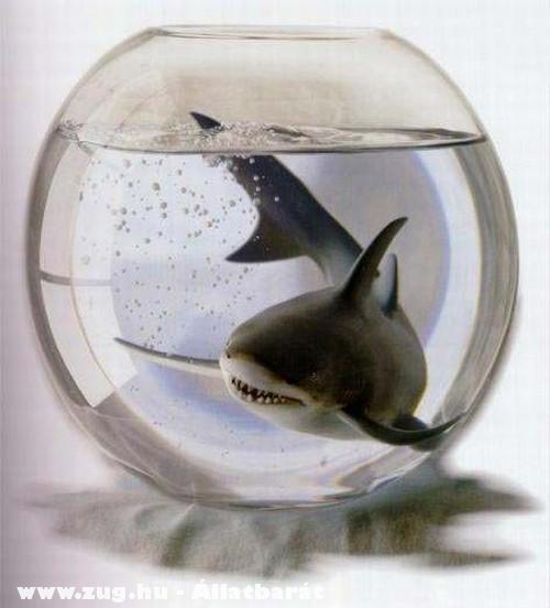 Mini cápa