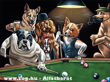 Kutyák meccse
