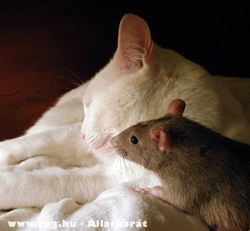 Cica-egér barátság