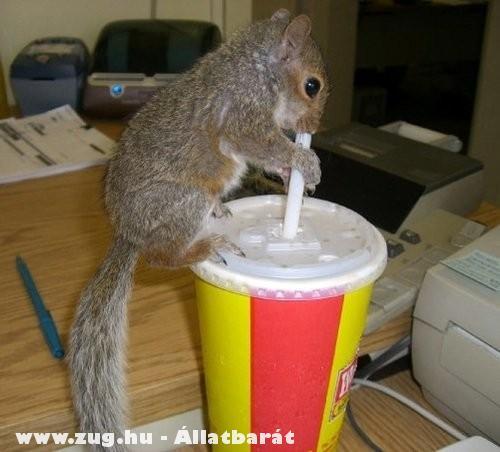 Megkóstolja az italt