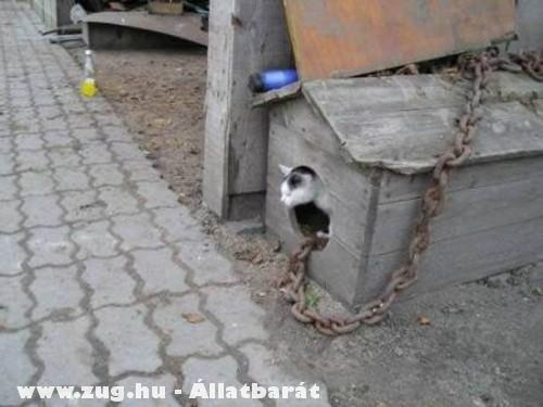 Túlméretezett lánc