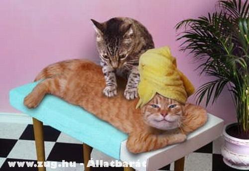 Relaxálnak a cicusok