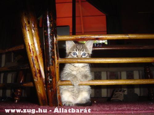 Rács mögött a cica