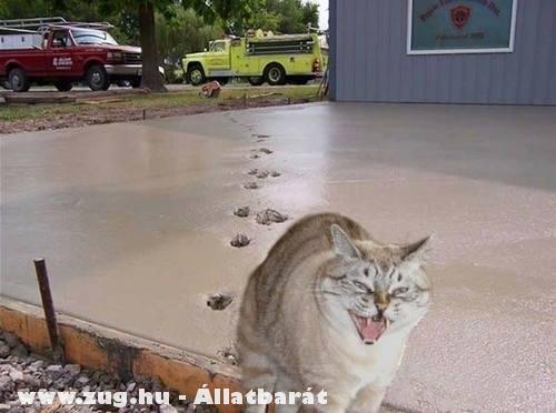 Gonosz cica