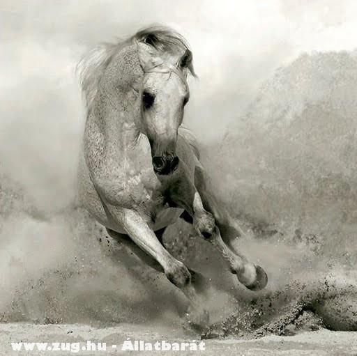 Gyönyörû ló :)