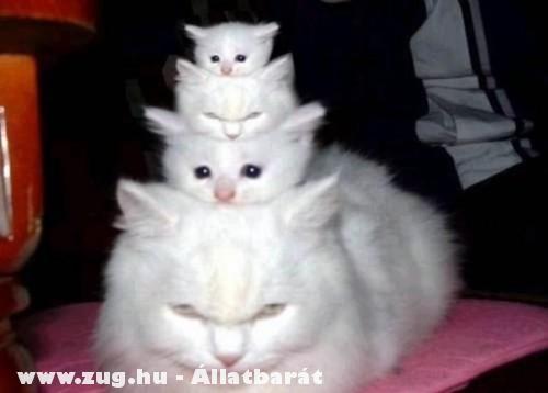 Cicák egymás hátán
