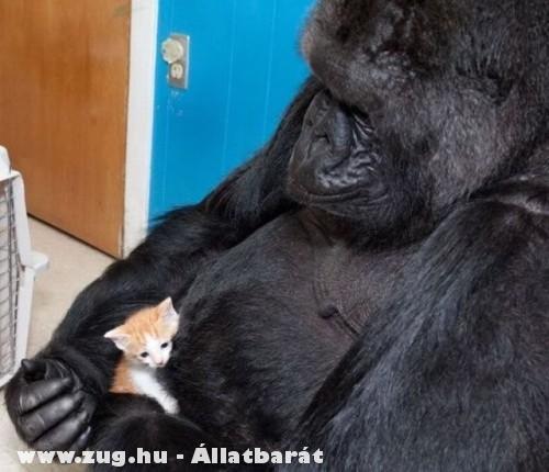 Majom és cica barátsága