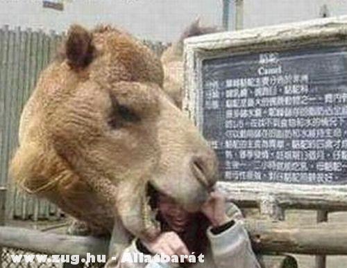 Az állatot etetni tilos!