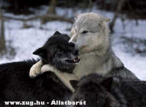 Adj egy puszit!