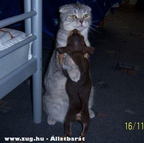 Állati tánc