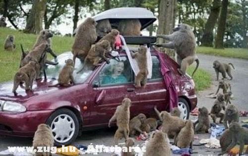 A majmok támadása