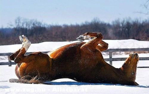 Brékelõ lovacska